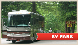 photo of a recreational vehicle in the redwoods